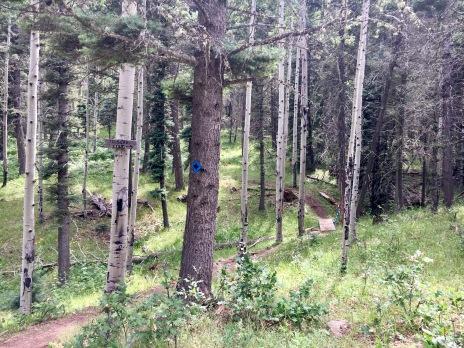 SB trail